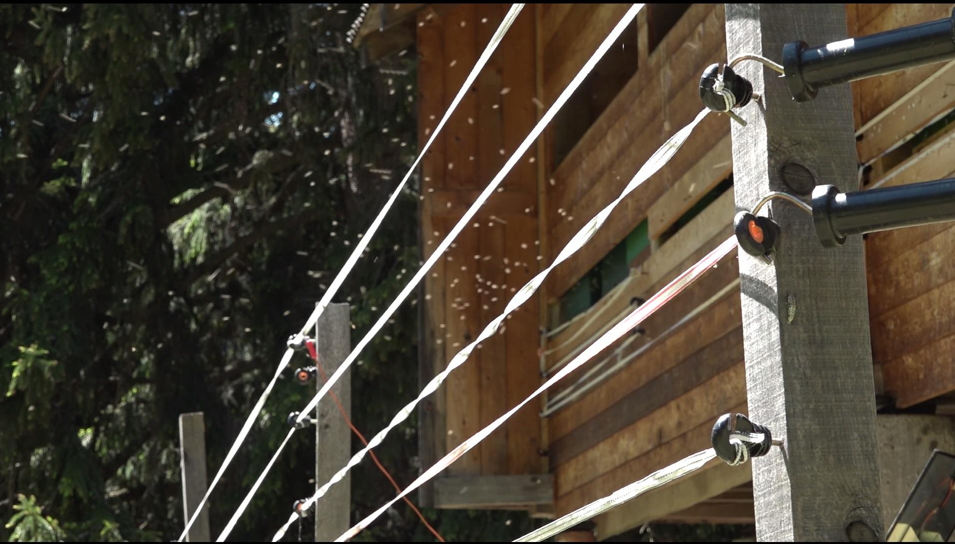 Wie schützt man Bienenstöcke gegen Schäden durch Braunbären? Eine neue Dokumentation.