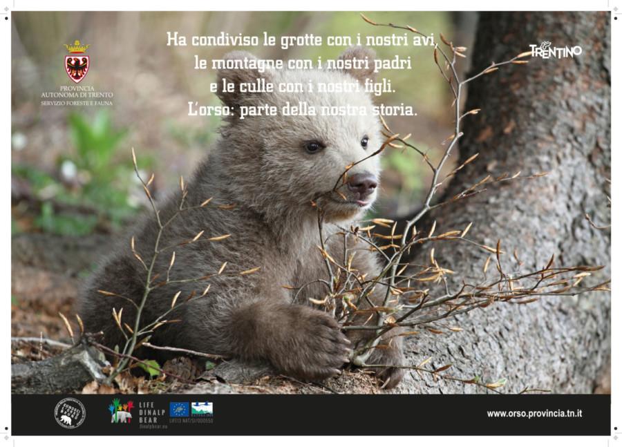 Meravigliose foto degli orsi – i nuovi poster