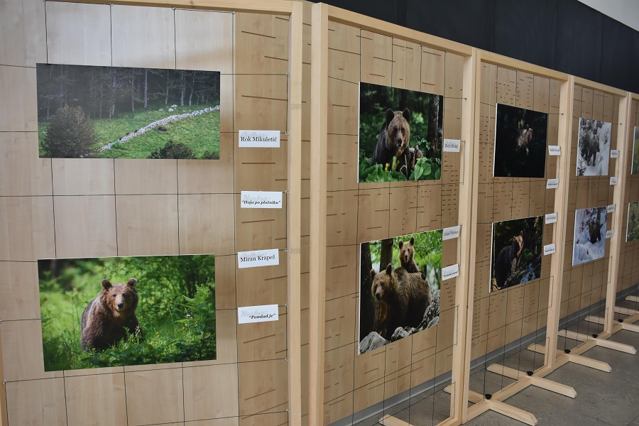 Photographic exhibition »Life with bears« on display in Pivka