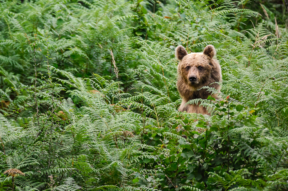 How to behave in bear areas