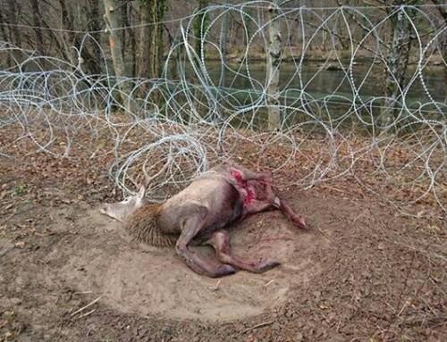 Stellungnahme zur Errichtung von »baulichen Maßnahmen« entlang der slowenisch-kroatischen Grenze