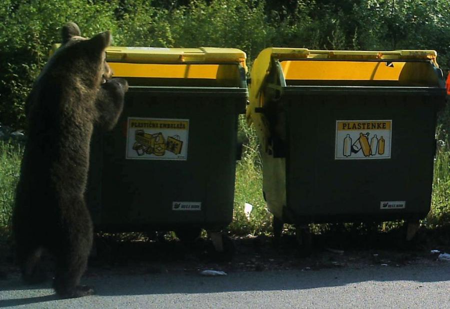 Richtlinien für die Bäreneingreifgruppen