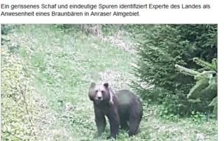 20160627 - Novica o medvedu Rudolfu v Avstriji