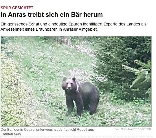 """Braunbär """"Rudolf"""" macht Schlagzeilen"""