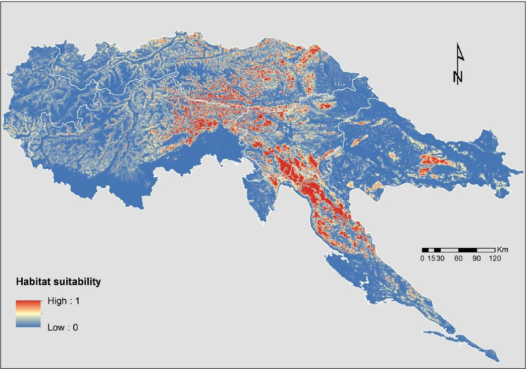 There is enough suitable habitat for bear in the Alps and the Dinarics, but it is strongly fragmented