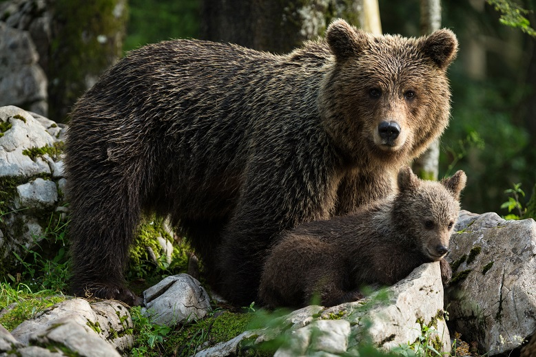 Dobre prakse projekta LIFE DINALP BEAR živijo naprej