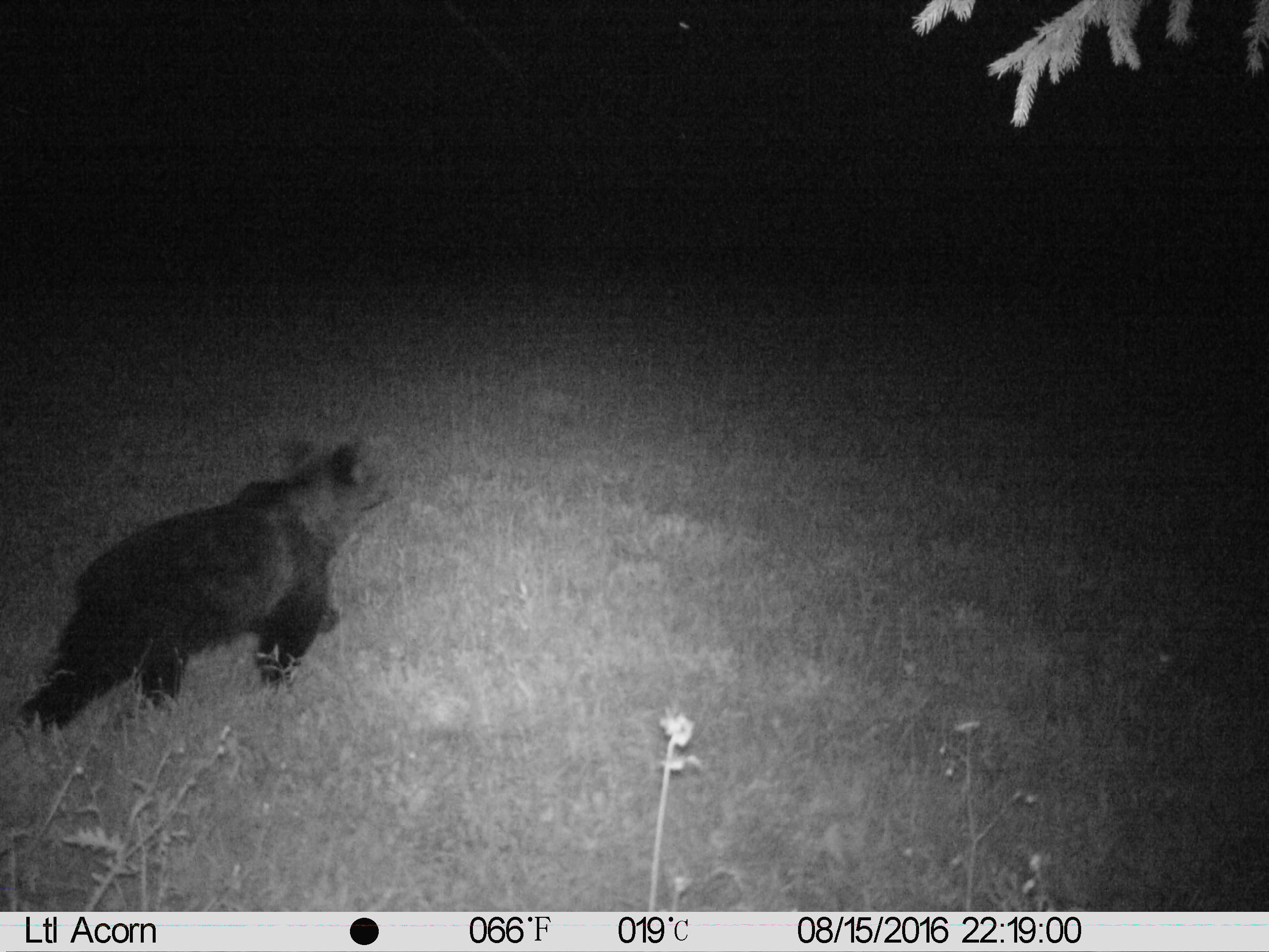 Video surveillance of bears in the area of state road Ljubljana – Kočevje in 2016