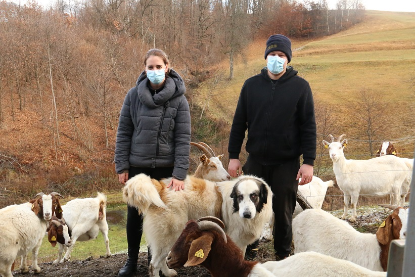 Livestock guarding dogs continue to protect livestock also after the project
