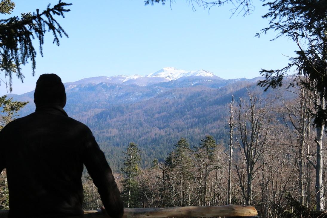 Spoznavajte medveda na gozdni učni poti in v gozdni hiši Mašun