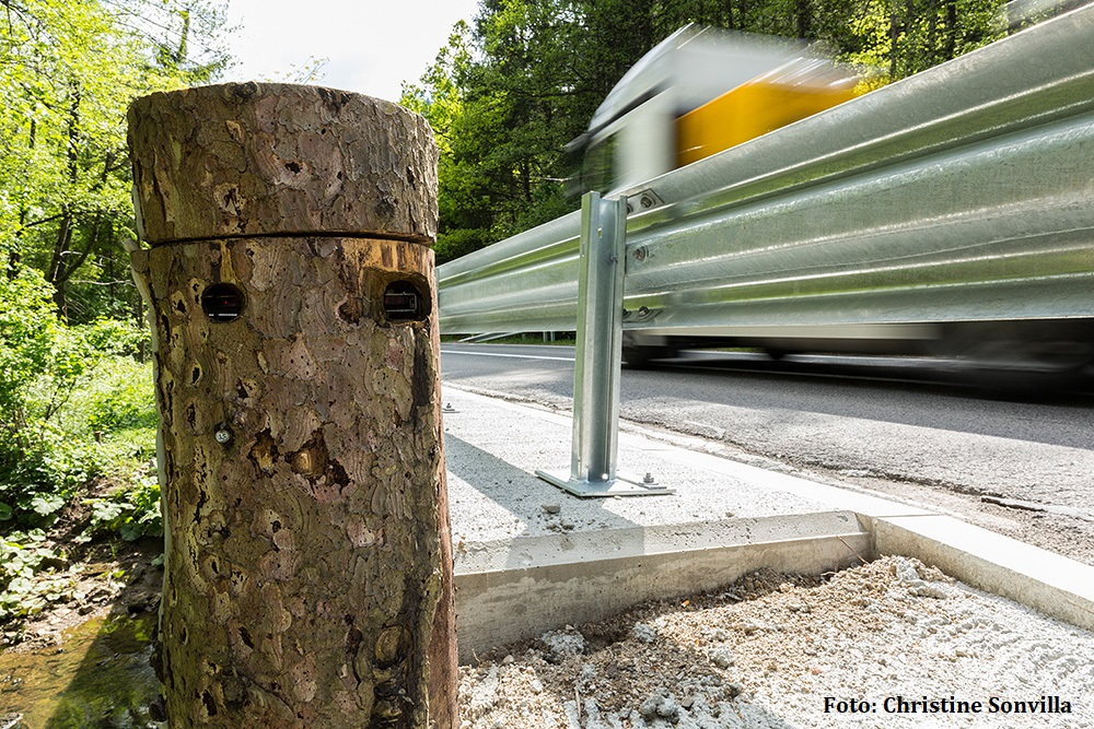 A new leaflet about reducing brown bear-vehicle collisions in Slovenia