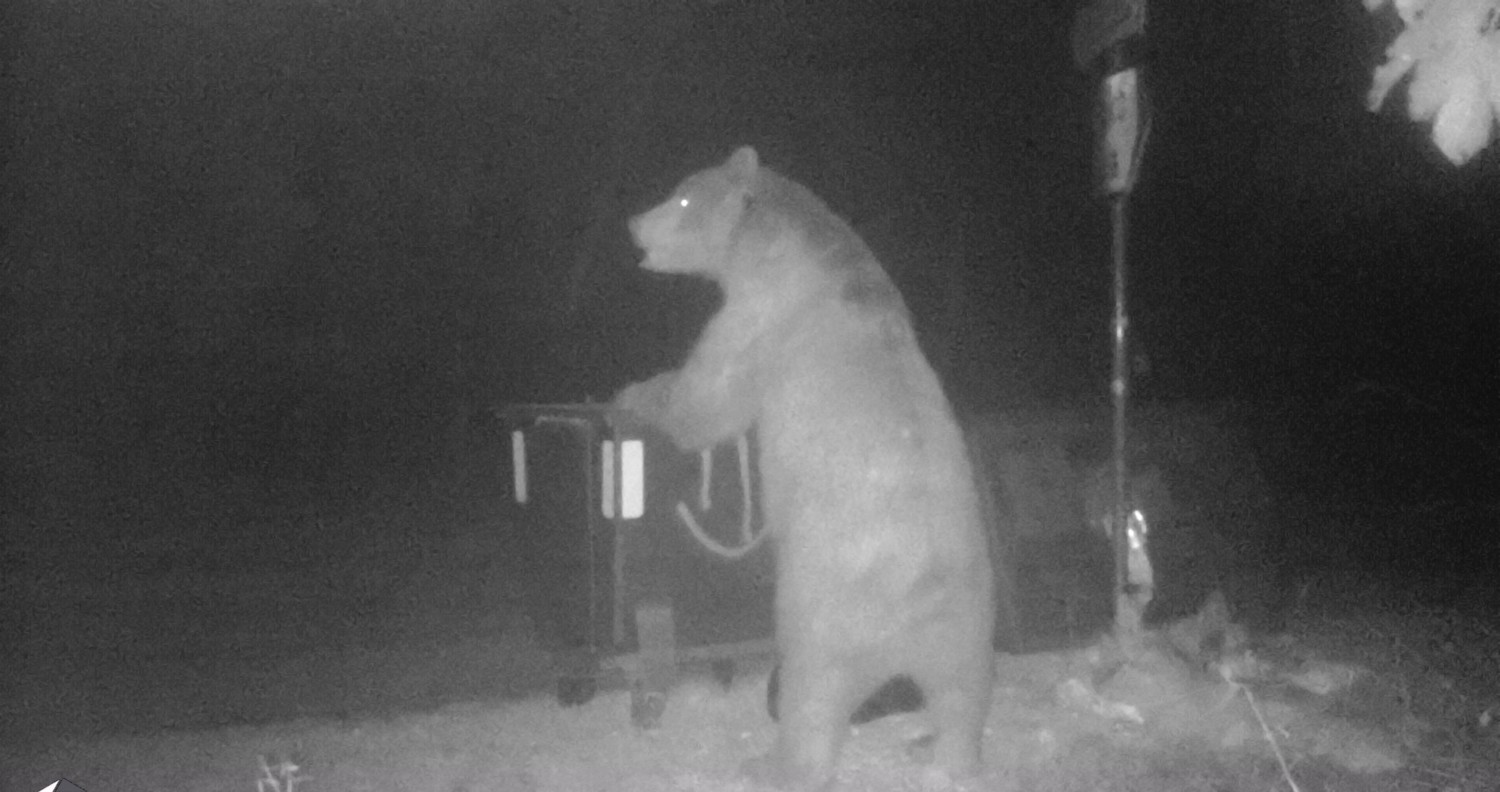 Monitoring the presence of a bear near garbage cans on Vojsko plateau, west Slovenia