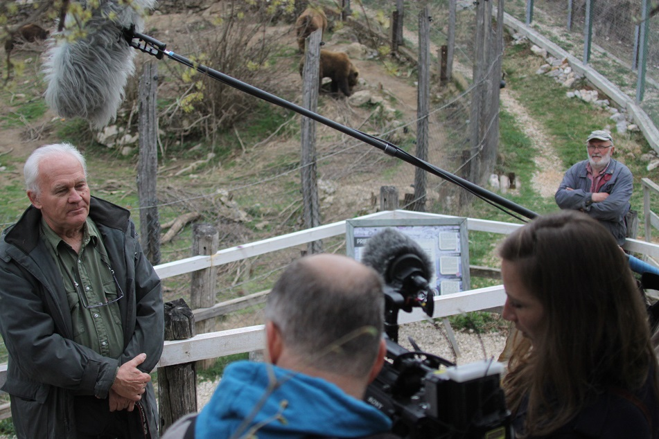 Bear eco-tourism in Croatia