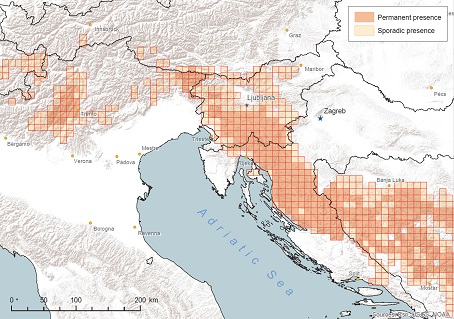 Population Status Report for brown bears in the project area
