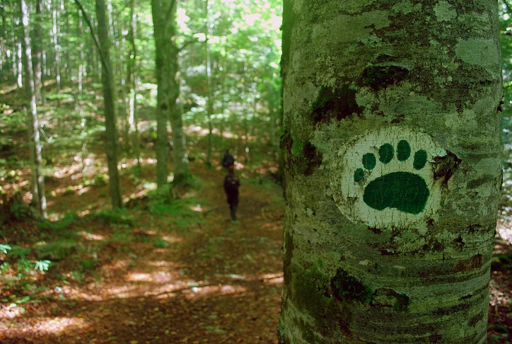 Po študijskem obisku Discover Dinarics so nastali novi medvedu prijazni turistični produkti
