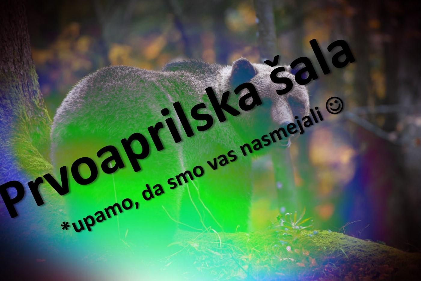 V Slovenijo in na Hrvaško potrebno doseliti nove medvede