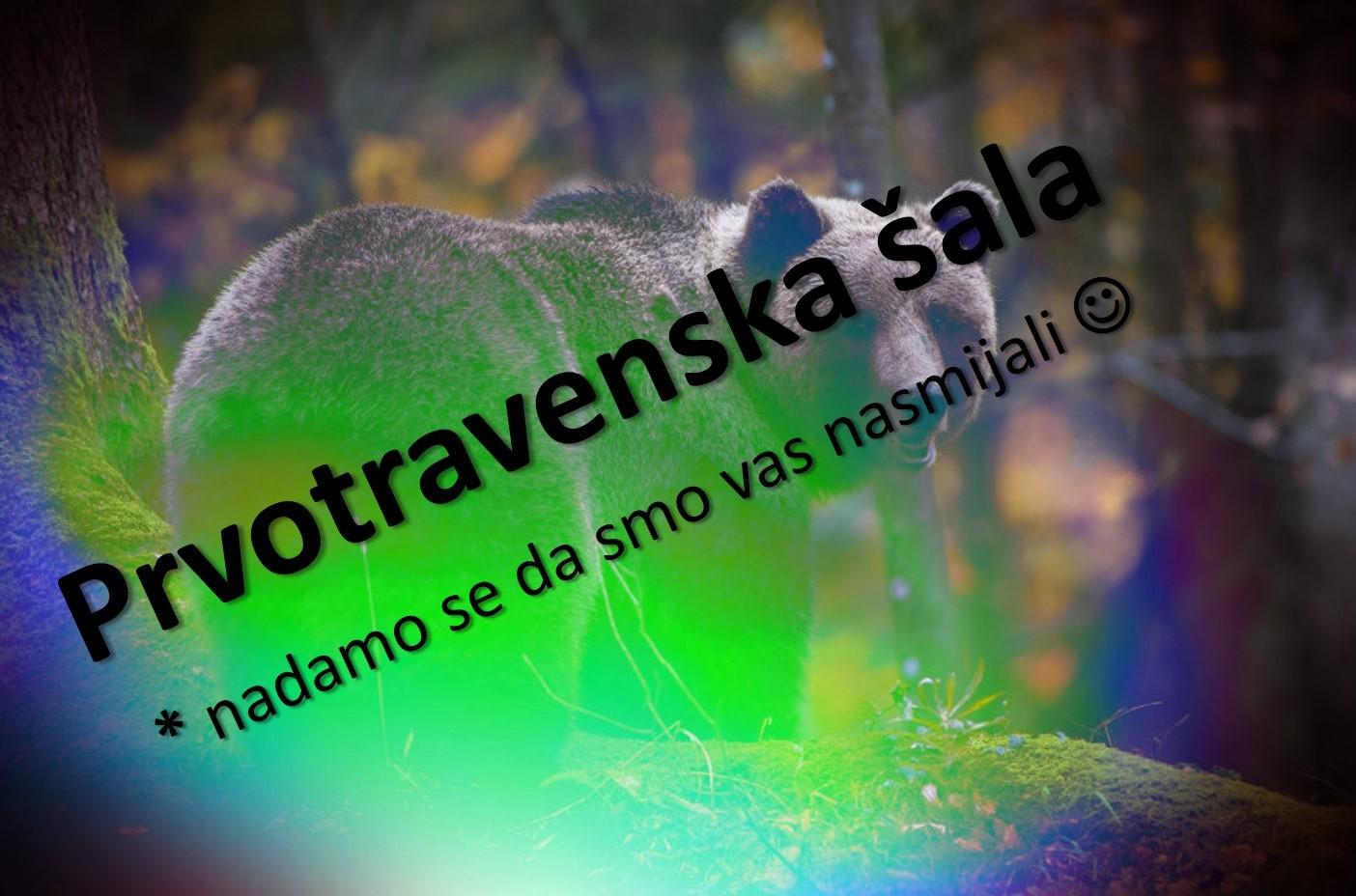 U Sloveniju i Hrvatsku hitno treba uvesti još medvjeda
