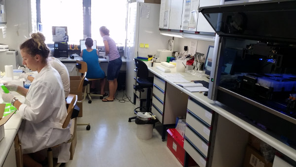 It's very crowded in our laboratory as of late. Processing of bear scats is in full swing.